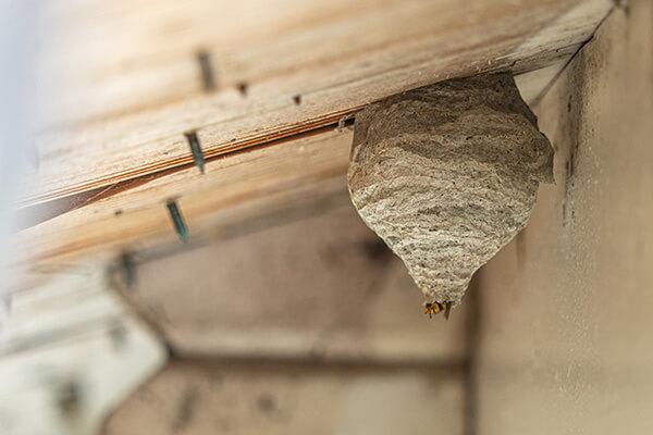 Bee, wasp, and hornet exterminators serving all of Wisconsin. Batzner Pest Control